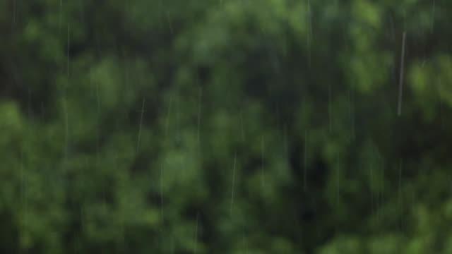 stockvideo's en b-roll-footage met regendruppels regenval met natuur bos op de achtergrond wazig - regen zon