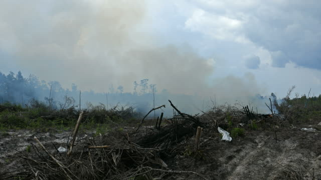Rainforest destruction for palm oil plantation in Indonesia On the island of Kalimantan (ex-Borneo), vast rainforests and jungles are completely destroyed by corporations, the land is cleared by fire and the new land will be used to mostly plant palm oil trees. The palm oil will be exported then to the Western world. indonesia stock videos & royalty-free footage