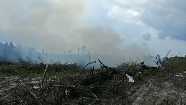 vidéos et rushes de destruction de la forêt tropicale pour des plantations d'huile de palme en indonésie - forêt tropicale humide