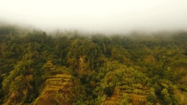 Rainforest in cloud, Bali,Indonesia video