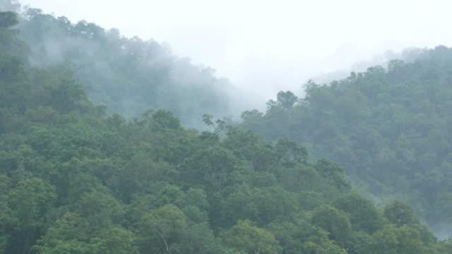 rainforest in salween river - yeti video stock e b–roll