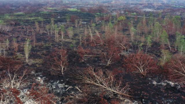 Rainforest of Indonesia burnt down by criminal slash and burn