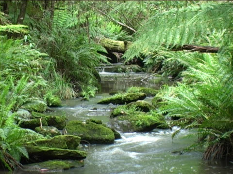 Rainforest stream with sound video