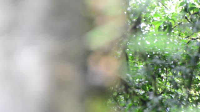 Rainforest video