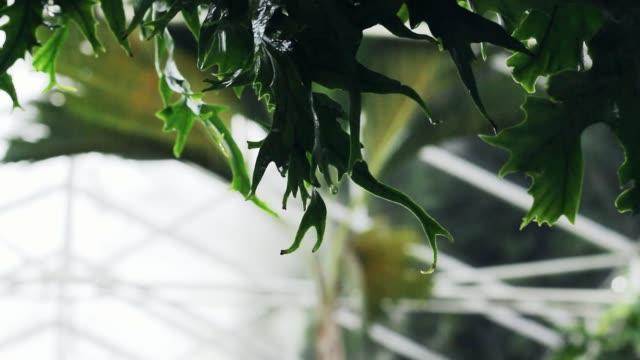 yeşil park'ta yağmur. - start stok videoları ve detay görüntü çekimi