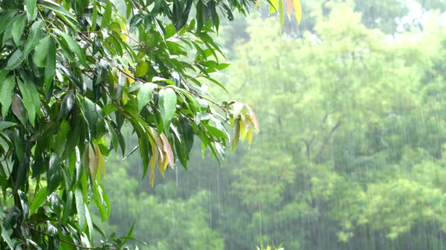 Raining in the tropical forest Raining in the tropical forest vascular plants stock videos & royalty-free footage