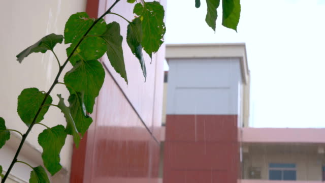 Raining over apartments Focus on Leaves of pot plant video
