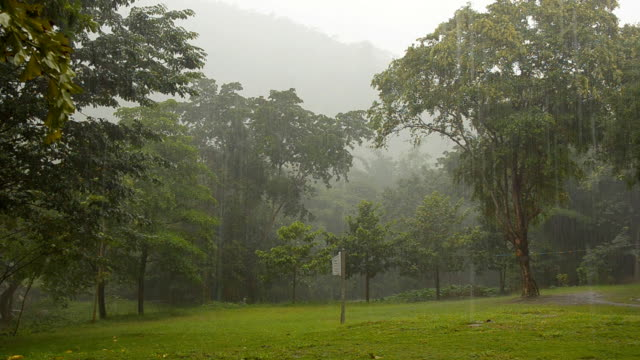 rainly tropical forest