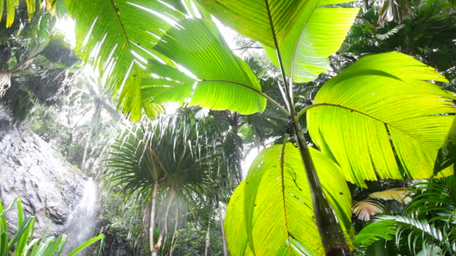 Rainstorm in tropical forest. HD1080P video