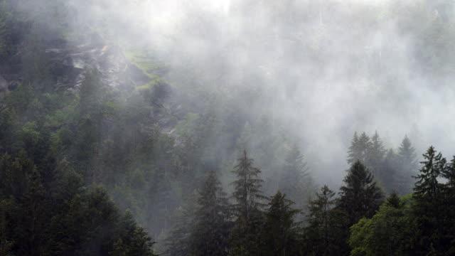 regnig dag i schweiziska tallar omfattas mountain valley - wengen bildbanksvideor och videomaterial från bakom kulisserna