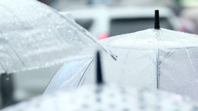 vídeos de stock e filmes b-roll de rainy day landscape - guarda chuva