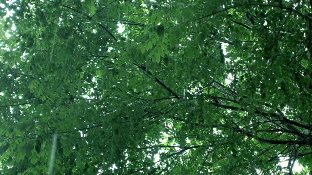 stockvideo's en b-roll-footage met regenachtige dag - plantdeel