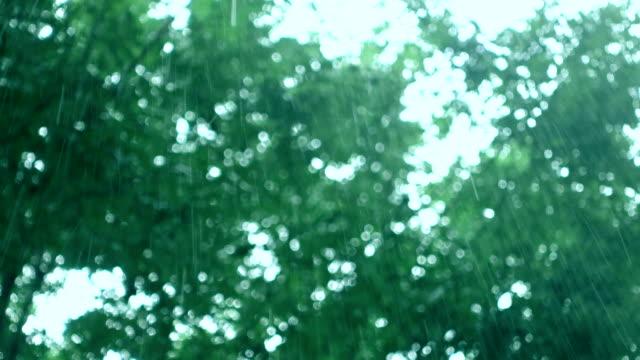 Rainy day Rainy day plant part stock videos & royalty-free footage