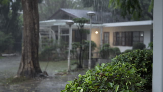 4k rainy day with blurred house in the background, chiang mai, thailand - albero tropicale video stock e b–roll