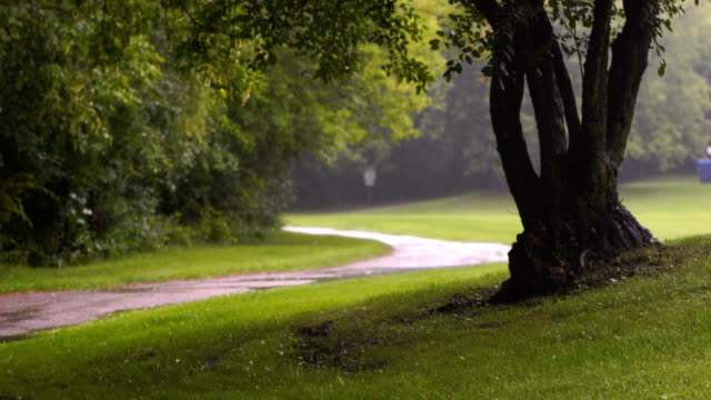 Rainy days in Toronto Park