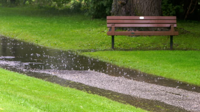 Rainy days in Toronto Park Rainy days in Toronto Park natural parkland stock videos & royalty-free footage
