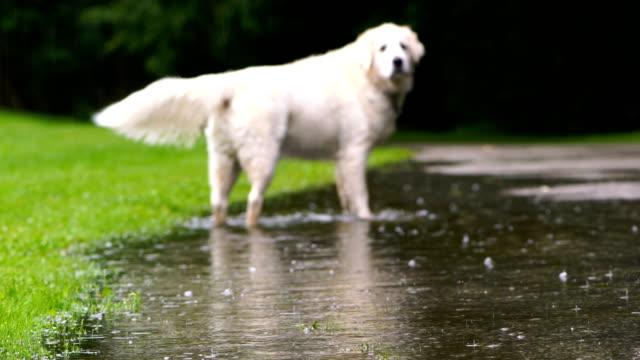 regniga dagar i toronto park - hund skog bildbanksvideor och videomaterial från bakom kulisserna