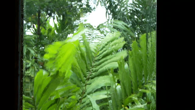 Rainy weather Rain and winds blow tropical palms as viewed from behind a glass window  bay window stock videos & royalty-free footage