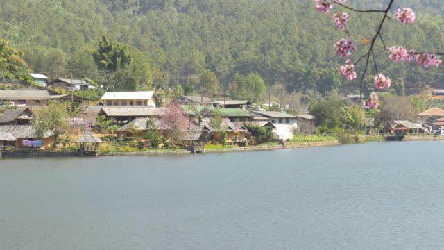 rak tailandese villaggio con fiori di ciliegio rosa - censura video stock e b–roll
