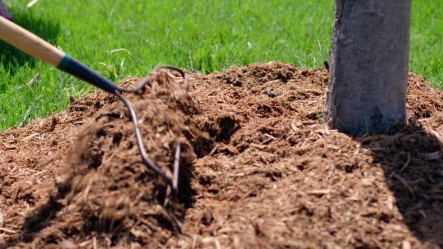 Raking garden mulch around base of a plum tree video