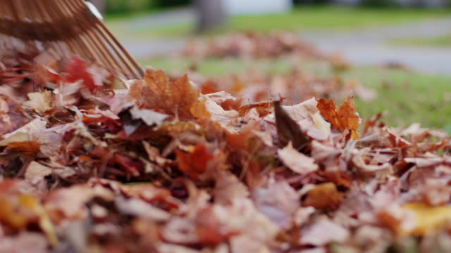 Raking Leaves Low Angle Move Left a low angle view of a raking up leaves into a pile as the view moves from right to left chores stock videos & royalty-free footage