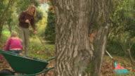 istock HD DOLLY: Raking Leaves 113643556