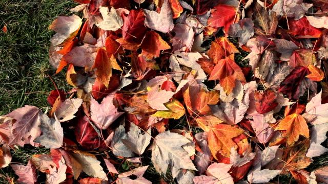 raking 잎 - 잎 스톡 비디오 및 b-롤 화면