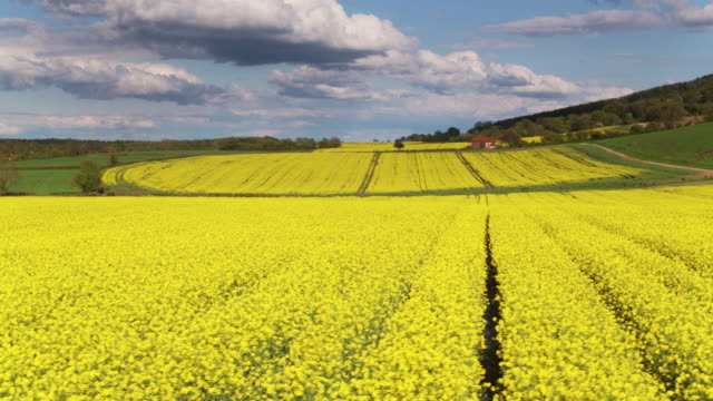 rapeseed field - drone shot - south downs video stock e b–roll
