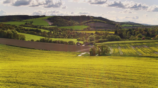 rapeseed fields in west sussex - drone shot - south downs video stock e b–roll