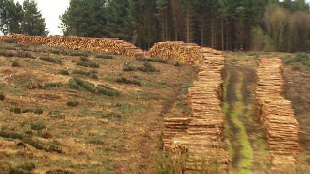 редкие снимок обезлесения в ирландии - хвойное дерево стоковые видео и кадры b-roll