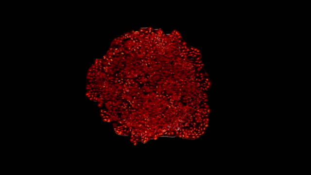 Raspberries crush on a black background (bottom view) video