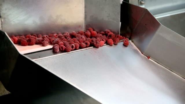 raspberries in food factory - замороженные продукты стоковые видео и кадры b-roll