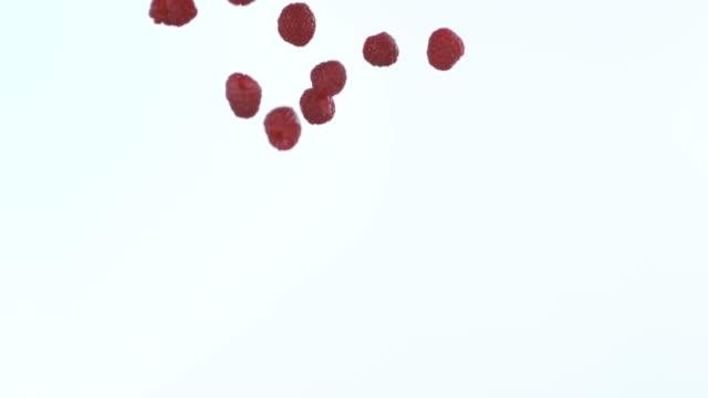 vídeos y material grabado en eventos de stock de las frambuesas hacen del mundo un lugar mejor - frambuesa