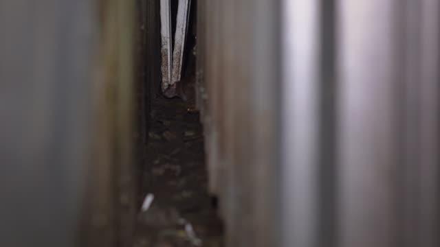 çöp kutularında fareler. büyük şehirlerin gizli bir parçası - kemirgen stok videoları ve detay görüntü çekimi