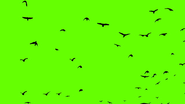 raven flock green screen video