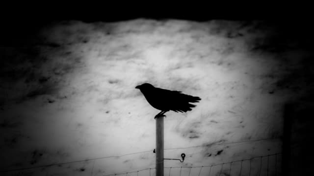 Raven perched on a wooden fence post with an artistic vingette