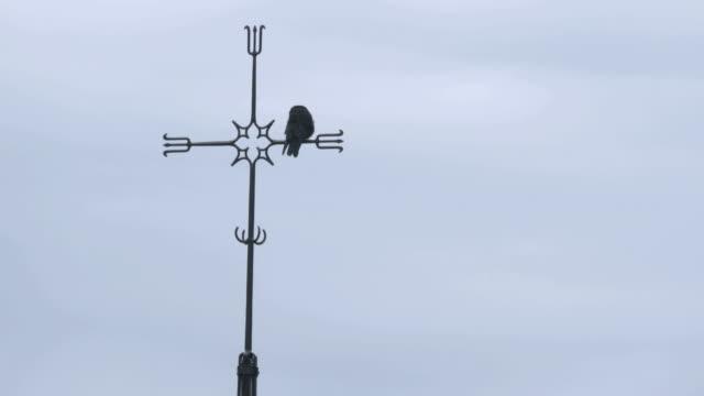 raven vilar på en kyrktornet. - 4 kilometer bildbanksvideor och videomaterial från bakom kulisserna