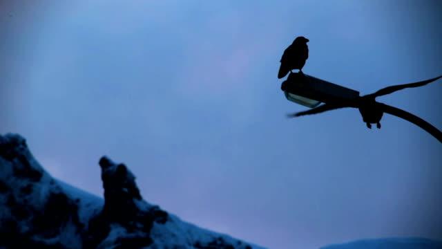 ravens in città di montagna - appollaiarsi video stock e b–roll
