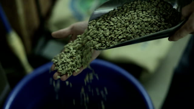Raw Coffee Beans Raw coffee beans being scooped and evaluated handful stock videos & royalty-free footage
