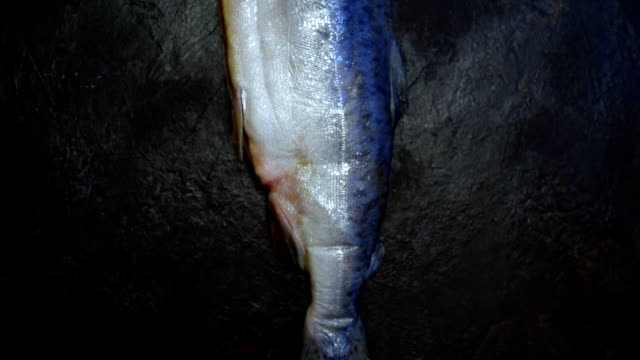 Raw whole salmon fish over spotty black background video