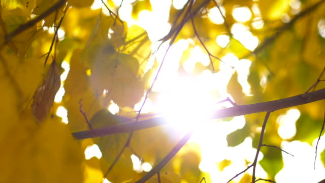 ray of sunshine between the leaves in the autumn video