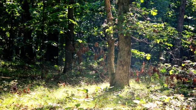 stockvideo's en b-roll-footage met zonnestralen schijnen door de bomen op een mistige ochtend in de herfst - eindhoven