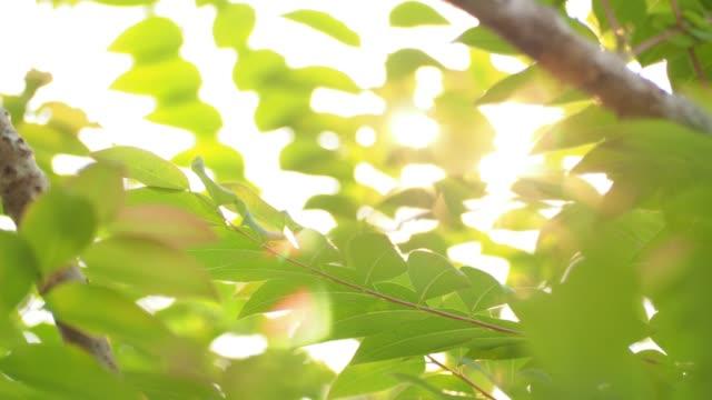 朝の風に吹かれて、緑の葉と枝の木を通して光線が光ります。ぼかしの背景に太陽の光と緑の葉の性質.モーション4k 映像 - 木漏れ日点の映像素材/bロール
