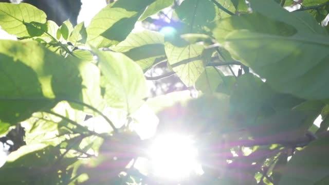 太陽の光は、木々の緑の葉を通って進みます。緑の葉と壊れる太陽の光を持つライブテクスチャ。クローズ アップ - 木漏れ日点の映像素材/bロール