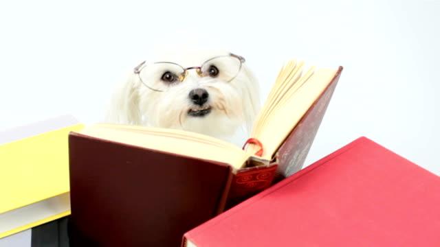 Reading Comprehension? video