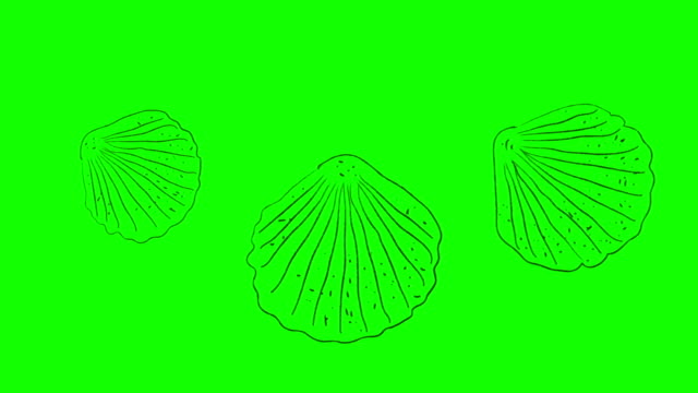 Real Animated Cartoon Shells on a Green Screen Background Real Animated Cartoon Shells on a Green Screen Background animal shell stock videos & royalty-free footage