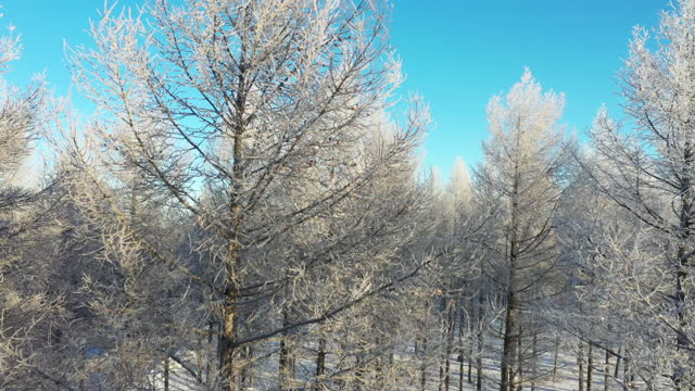 Real Time / Aerial image of a forest covered in snow
