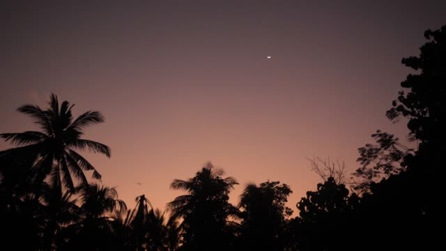 real time shot of crescent moon at twilight and bird flying over tropical trees - полумесяц форма предмета стоковые видео и кадры b-roll