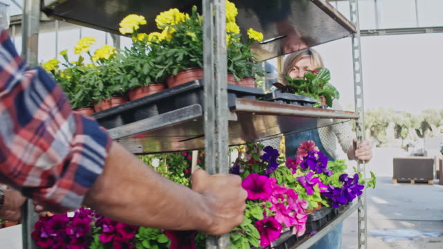 Real time video of colleagues are pushing trolley amidst plants