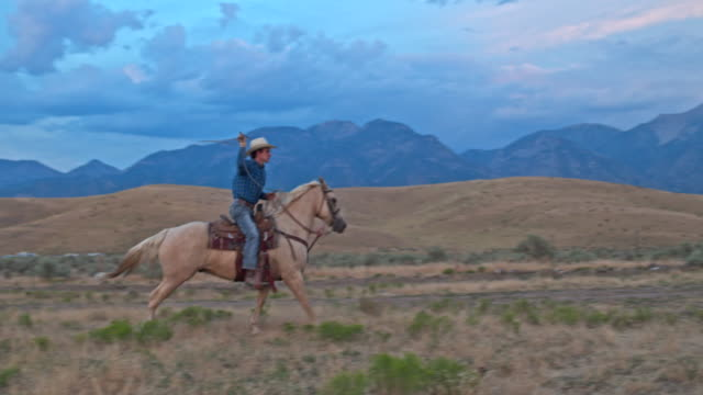 Real time video of cowboy on his horse with lasso on the range video